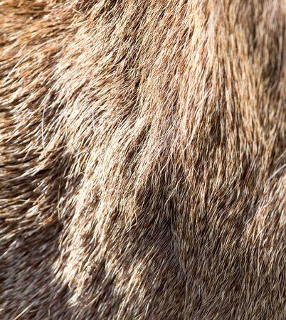 gelding: horse hair as background