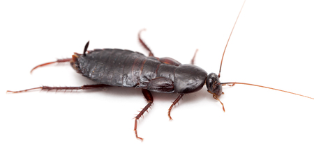 revolting: cockroach on a white background