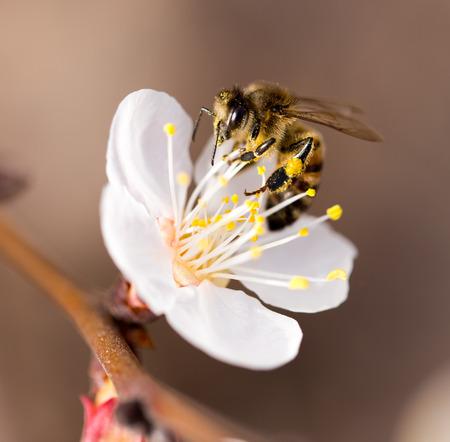 Bij op een bloem in de natuur. macro Stockfoto