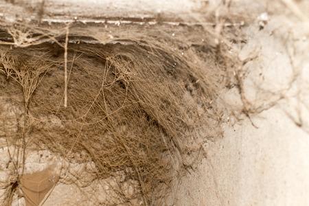 arachnids: old web as background Stock Photo