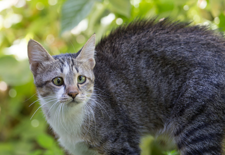 cute bi: cat in the grass on the nature Stock Photo