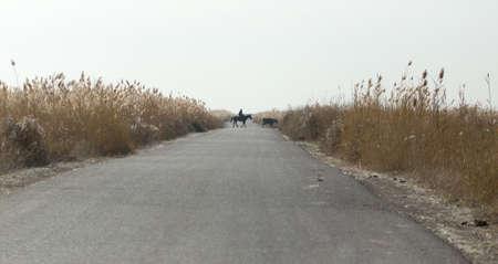 canne: strada asfaltata tra le canne