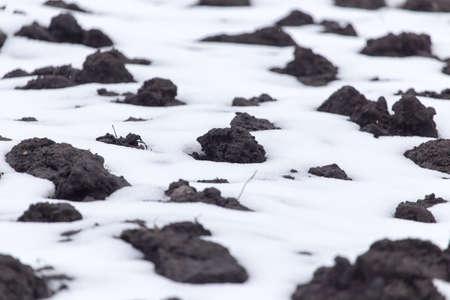 black soil: black soil in the snow on the nature