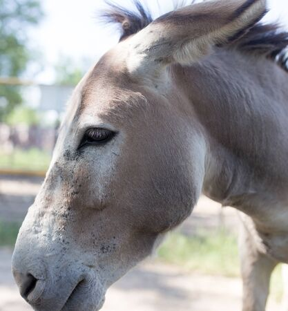 burro: Portrait of a donkey in a park on the nature Stock Photo