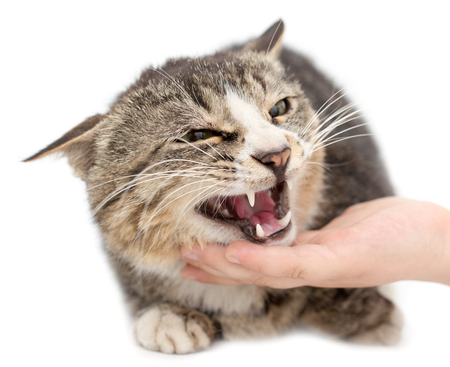 stroking: hand stroking a cat on a white background