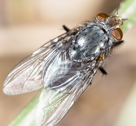 super macro: fly in nature. super macro Stock Photo