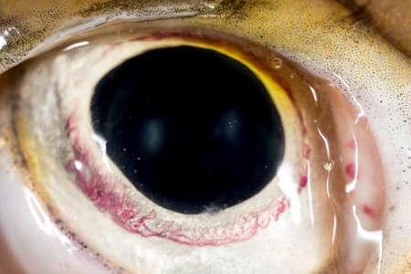 pike: Eye pike fish. super macro Stock Photo