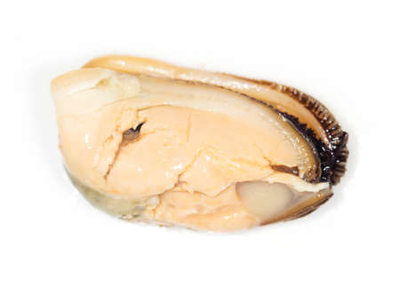 lithic: mussel on a white background