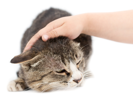 fondling: hand stroking a cat on a white background