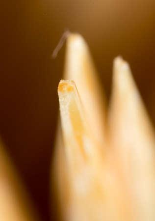 detritus: toothpicks as a background. macro