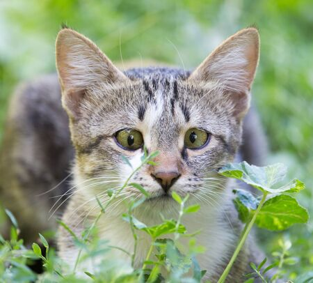 cat in the grass on the nature Stock Photo
