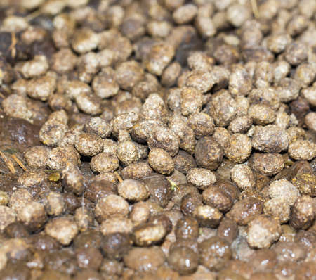 droppings: rabbit droppings Stock Photo