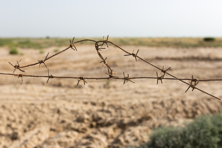 cattle wire wires: barbed wire fence in the nature