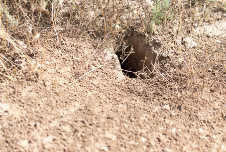 burrow: animal burrow in the ground