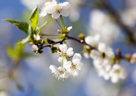 tiefe: flowers on the tree against the blue sky Lizenzfreie Bilder