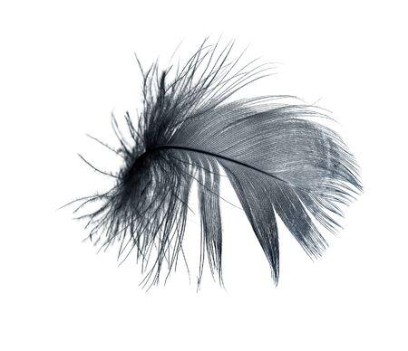 Plume noire sur un fond blanc