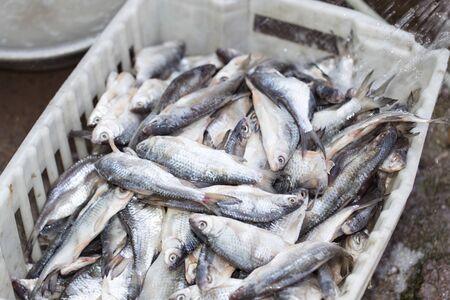 brine: salted fish in brine as background Stock Photo