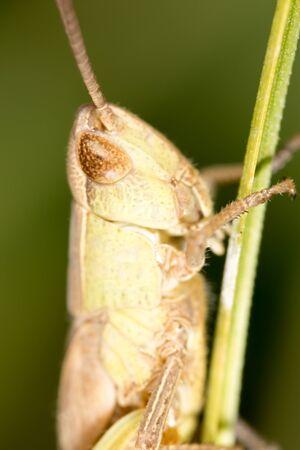 Grasshopper. super macro
