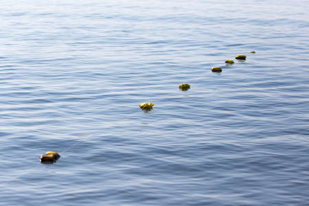 fishing floats: Fishing floats on the surface of the water