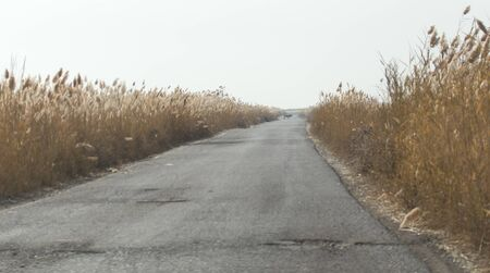 canne: asphalt road in the reeds Archivio Fotografico
