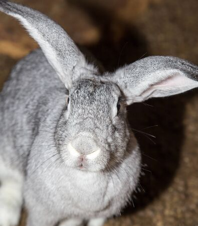 growing rabbits on the farm