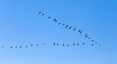 a flock of birds flying south in the blue sky Banque d'images