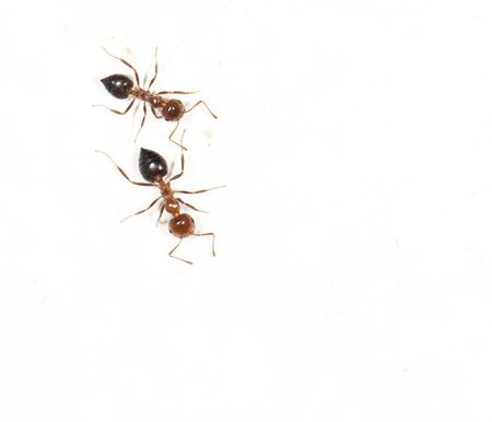 similitude: ants on a white wall. close
