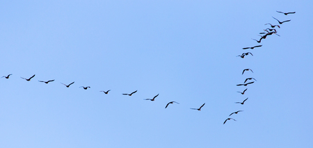 migrate: a flock of birds flying south in the blue sky Stock Photo