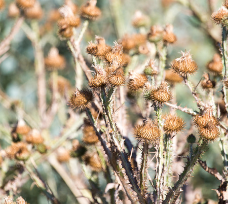 prickly: prickly plant in nature
