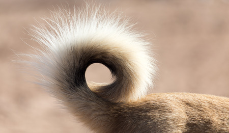 dogs tail in nature