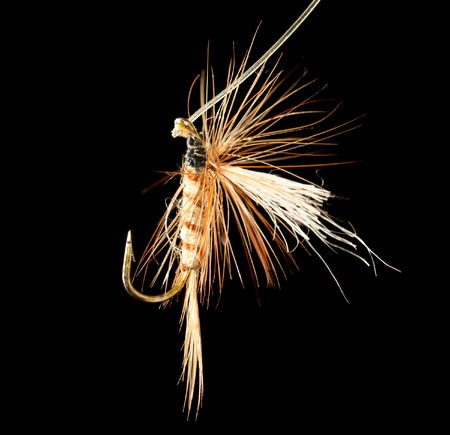 catch fish: fly to catch fish on a black background