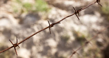 barbed wire fence: barbed wire fence in the nature
