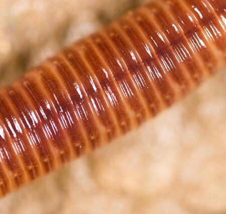 worm in nature. super macro