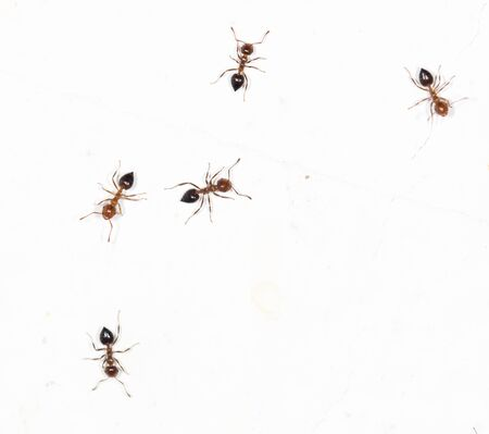 similarity: ants on a white wall