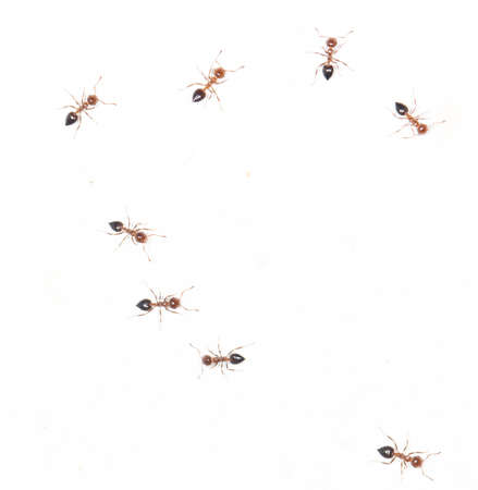 similitude: ants on a white wall