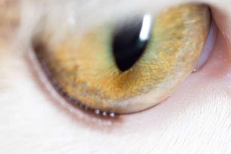cornea: cats eyes. macro