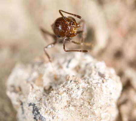 ant on the ground. macro