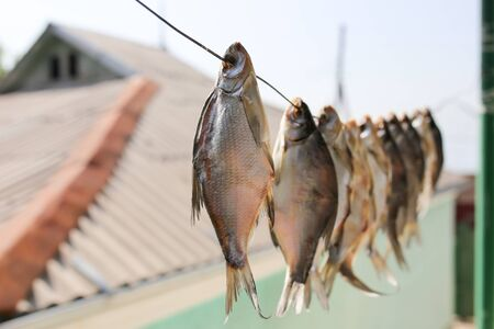 air dried: sun-dried salted fish in the air Stock Photo
