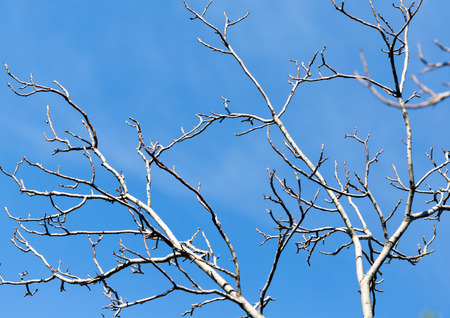 leafless: leafless tree branches against the blue sky Stock Photo