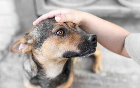 man caresses a dog hand Stock Photo