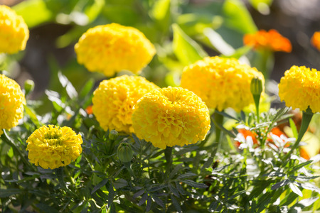 bright eyed: beautiful yellow flower in nature Stock Photo
