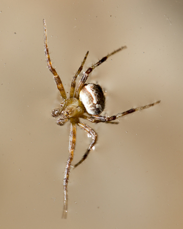 Spider on the water surface. macro