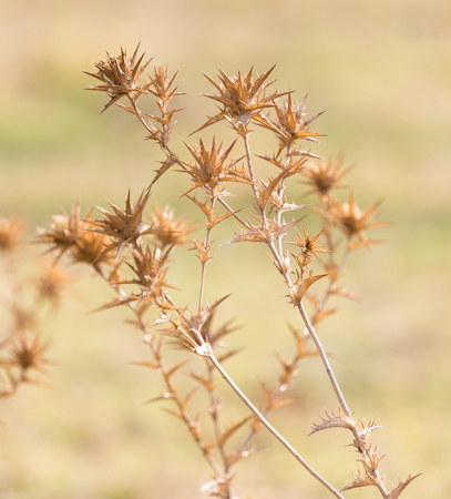 dry prickly grass outdoors