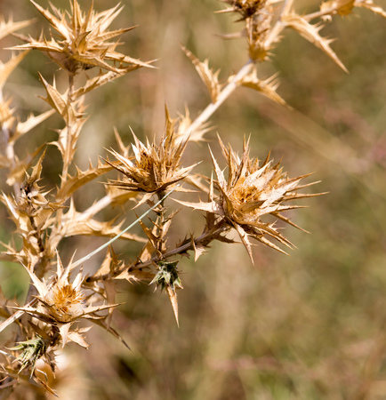 prickly: dry prickly grass outdoors