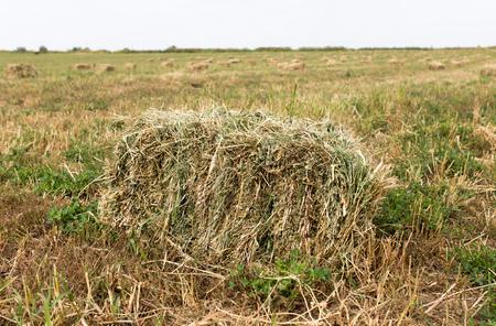 baler: bales of hay in the field