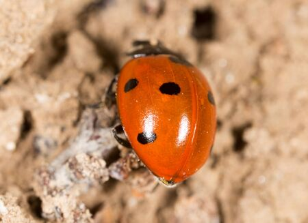 ladybug on the ground in nature