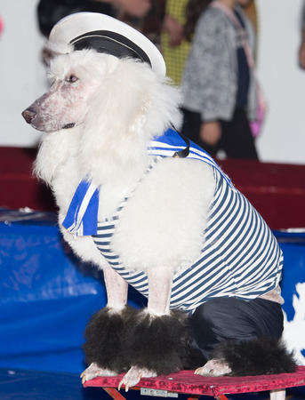 acts: dog acts in the circus
