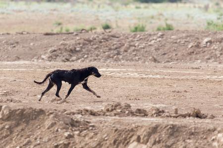 kampfhund: schwarzen Hund auf die Natur