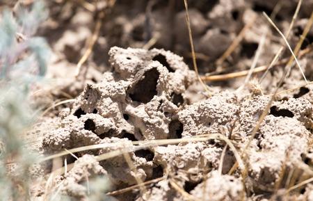 termite: termite holes in the ground