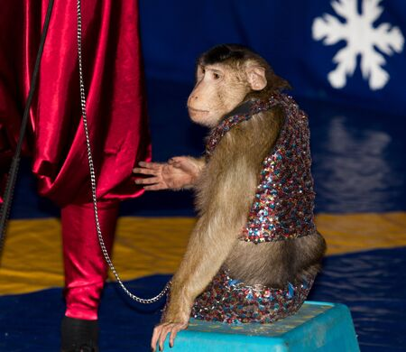 acts: monkey circus acts